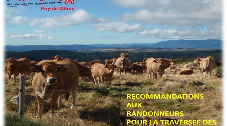 CONSEIL : Traversée des pâturages et des troupeaux,
