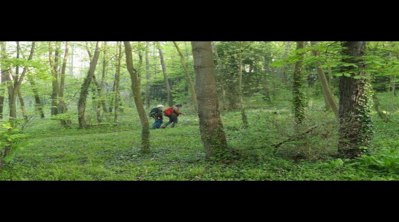 Comment l'ONF accueille le public en forêt